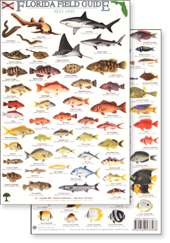 florida field identification guides by rainforest publications