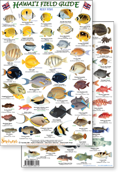 Hawaii field identification guides by sunburst publications for Hawaii fish guide