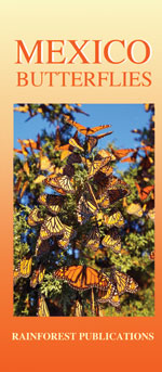 pocket field guide to Mexico butterflies