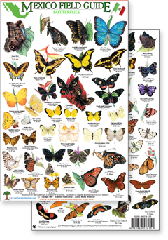 Mexico Pacific Coast Field Identification Guides by Rainforest Publications - photo#45