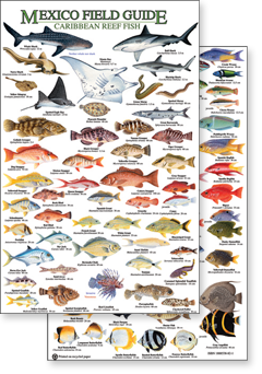 Guides By Caribbean Rainforest Identification Wildlife Field Publications Mexico